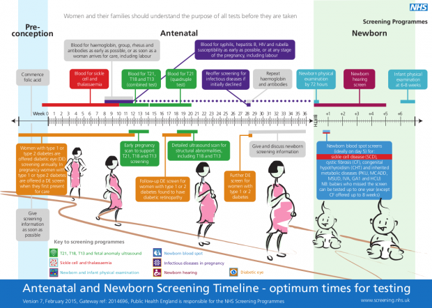 Antenatal and newborn screening timeline illustration.
