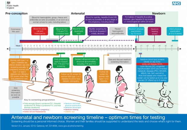 Timeline illustration detailing all the antenatal and newborn screening tests offered to pregnant women and newborn babies. In chronological order they are: diabetic eye screening for pregnant women with diabetes, antenatal sickle cell and thalassaemia screening, infectious diseases in pregnancy screening, fetal anomaly screening, newborn and infant physical examination, newborn blood spot screening and newborn hearing screening