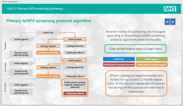 A slide from the e-learning modules describing the primary high risk HPV screening protocol algorithm. This shows the pathway from high risk HPV test to routine recall or colposcopy referral