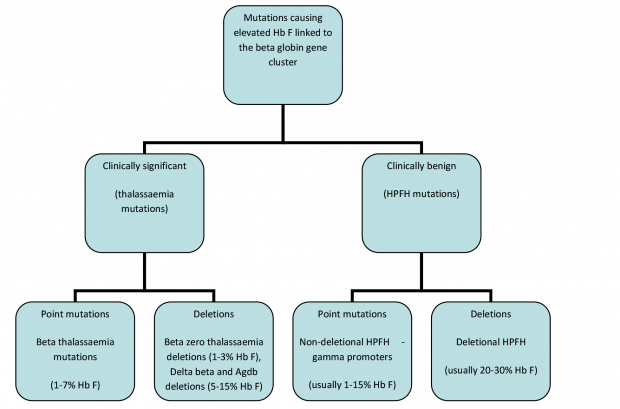 Diagram showing different types of mutations associated with high levels of fetal haemoglobin
